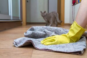 How to Get Rid of Cat Pee Smell - Avanti-eStore