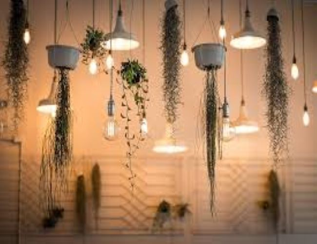 Lamps & Lights - Avanti-eStore