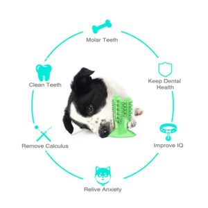 Best Dog Toothbrush Toy: It's Great for Your Pup's Dental Health!